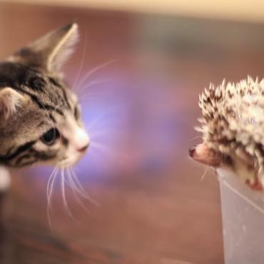 Video: nuostabi kačiuko ir ežiuko draugystė