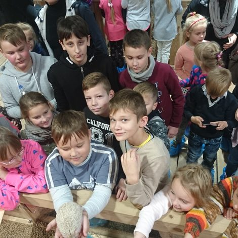 Schools at Zoopark