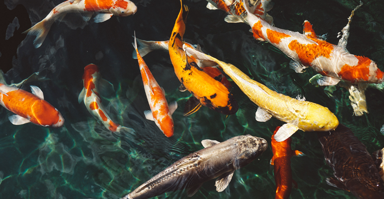 Nuo šiol Zooparke galite maitinti ir žuvytes