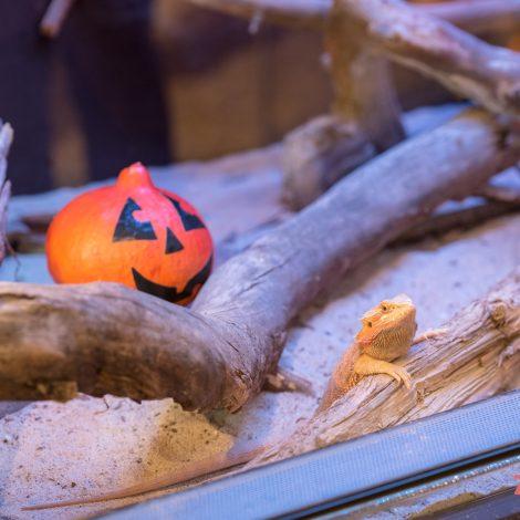 Helovinas ZOOPARKE