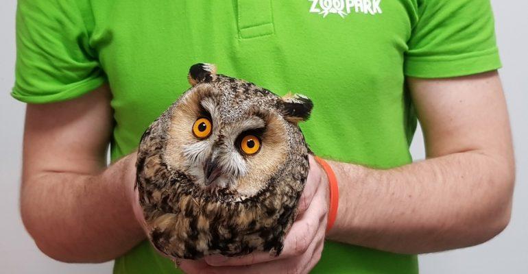 Prie Zooparko – netikėtas svečias