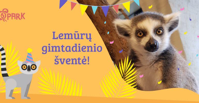 Lemūrų gimtadienio šventė!