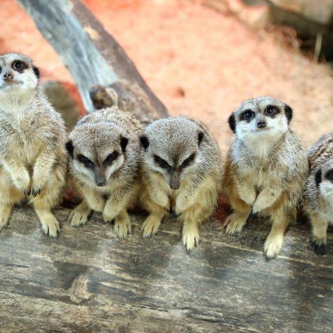 Zoopark atidarymo akimirkos