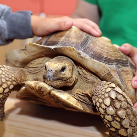 Video: Zoopark atidarymo akimirkos