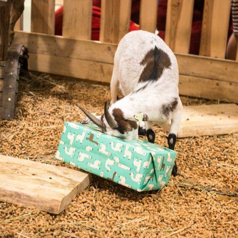 Birželio 22d. Zoopark šventė savo pirmąjį gimtadienį!